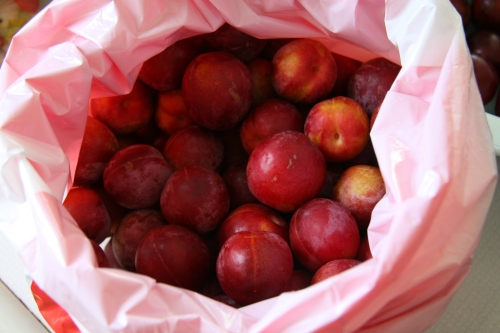 Just picked plums